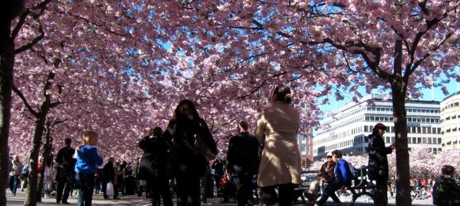 Stockholm en 2h, 2 jours, 2 semaines : les bons plans au printemps.